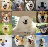 What dog breed should you be?